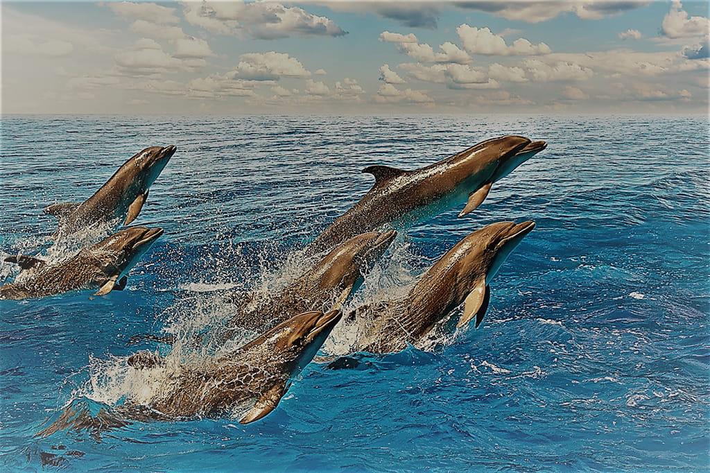 springende Delfine im Meer